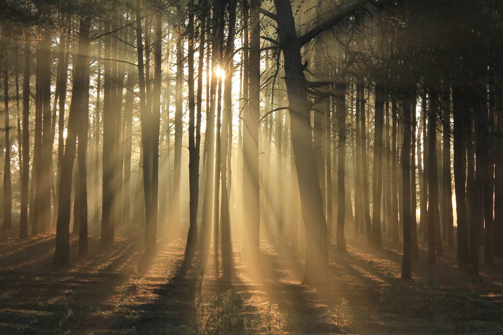 sunlight through woods - limiting beliefs