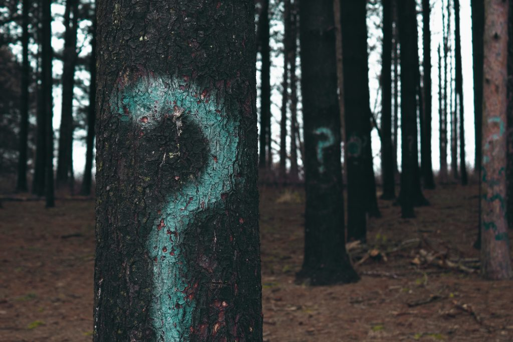 trees with question marks - how to improve self confidence